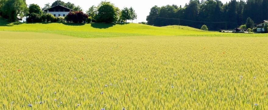 ökologischer landbau vielfalt