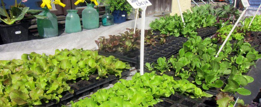 Jungpflanzen in der Gärtnerei Sondermoning