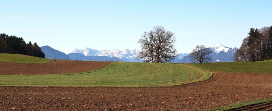 Bio-Gemüseanbau im Frühling