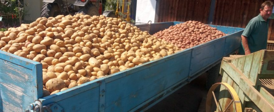 Bio-Kartoffeln – die Ernte 2018